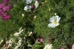 Flor blanca en campo Fotografía de archivo