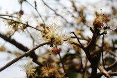 flor blanca en el árbol fotos de archivo libres de regalías