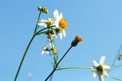 Flor blanca en el cielo azul fotos de archivo