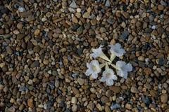 Flor blanca en el fondo de piedra Imagen de archivo libre de regalías