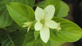 Flor blanca en el jardín Imagen de archivo