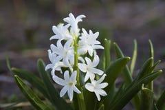 Flor blanca en el jardín Imágenes de archivo libres de regalías