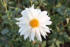 Flor blanca en el parque Imagen de archivo