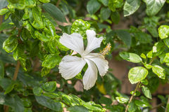 Flor blanca en el parque Fotos de archivo