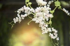 Flor blanca en el parque Foto de archivo