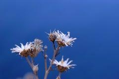 Flor blanca en fondo el mar, verano Imágenes de archivo libres de regalías