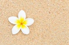 Flor blanca en la playa de la arena Fotos de archivo