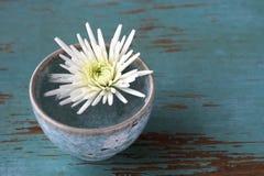 Flor blanca en pequeña taza imagenes de archivo