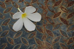 Flor blanca en superficies Fotos de archivo