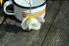 Flor blanca en una taza del hierro de agua Imagenes de archivo