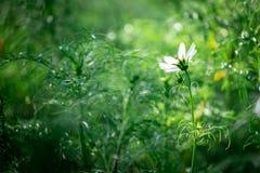 Flor blanca floreciente con anillo de la luz del sol por el árbol verde foto de archivo libre de regalías