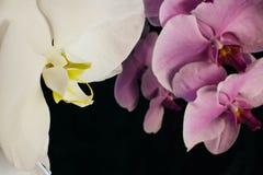 Flor blanca grande de la orquídea Fotografía de archivo libre de regalías