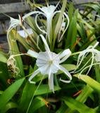 Flor blanca hermosa fotos de archivo