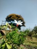 Flor blanca hermosa Foto de archivo