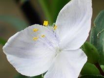 Flor blanca hermosa fotografía de archivo