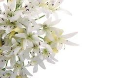 Flor blanca hermosa aislada en blanco Foto de archivo libre de regalías