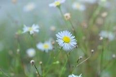 Flor blanca hermosa con tono del vintage de la falta de definición Imágenes de archivo libres de regalías