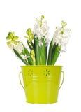 Flor blanca hermosa del jacinto, en un cubo verde, aislado en w fotos de archivo libres de regalías