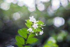 Flor blanca hermosa del vintage Foto de archivo
