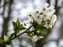 Flor blanca hermosa - detalle en día soleado fotos de archivo