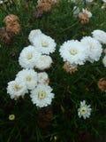 Flor blanca joven rodeada por muerte imagen de archivo
