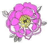 Flor blanca lujosa de la peonía pintada en colores en colores pastel Pintura foto de archivo