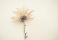 Flor blanca pálida Imagen de archivo