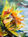 Flor blanca roja amarilla verde vibrante del girasol del viento del extracto del fondo del arte de la acuarela Imágenes de archivo libres de regalías