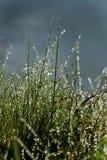 Flor blanca seca en hierba verde mojada Fondo al aire libre fresco de la naturaleza Imagen de archivo libre de regalías