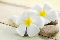 Flor blanca y amarilla del Frangipani Imagen de archivo libre de regalías