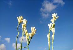 Flor blanca y cielo azul Fotografía de archivo