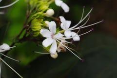 Flor blanca y hoja verde en una planta imagen de archivo