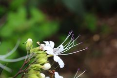 Flor blanca y planta con el fondo suave imagen de archivo