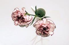 Flor blanca y rosada del clavel Imágenes de archivo libres de regalías