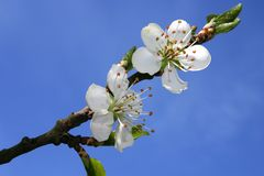 Flor blanco foto de archivo