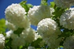 Flor blanco imagenes de archivo