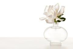 Flor blanco del Gardenia en el vector de mármol imagen de archivo