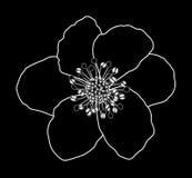 Flor blanco y negro ilustración del vector