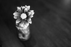 Flor blanco y negro en florero del tiki Imágenes de archivo libres de regalías