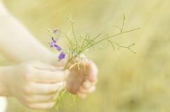 Flor blanda en las manos del niño Imagen de archivo