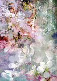 Flor blanda romántica de la cereza y fondo sucio Foto de archivo libre de regalías