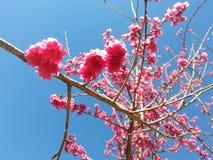 Flor, Blossum Fotografia de Stock