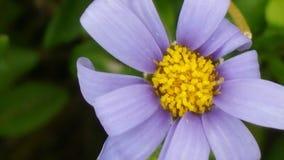 Flor bonita Fotos de archivo libres de regalías