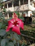 Flor bonita Imagens de Stock Royalty Free