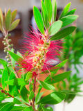 Flor bonita Imagen de archivo