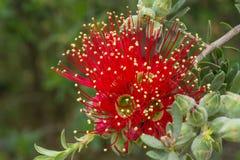 Flor bonita Imagen de archivo libre de regalías