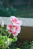 Flor bonita Imagem de Stock Royalty Free