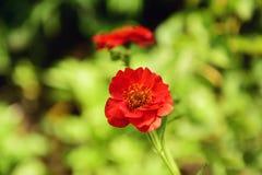 Flor bonita Foto de Stock