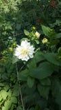 Flor bonita Fotos de Stock