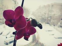 Flor bonita Imagenes de archivo